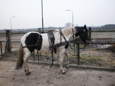 paardensport ad aluwen