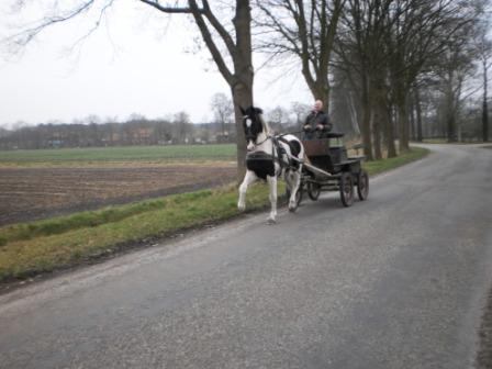 Paardensport ad alauwen