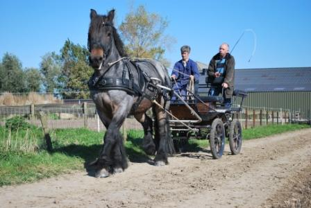 Paardensport ad lauwen